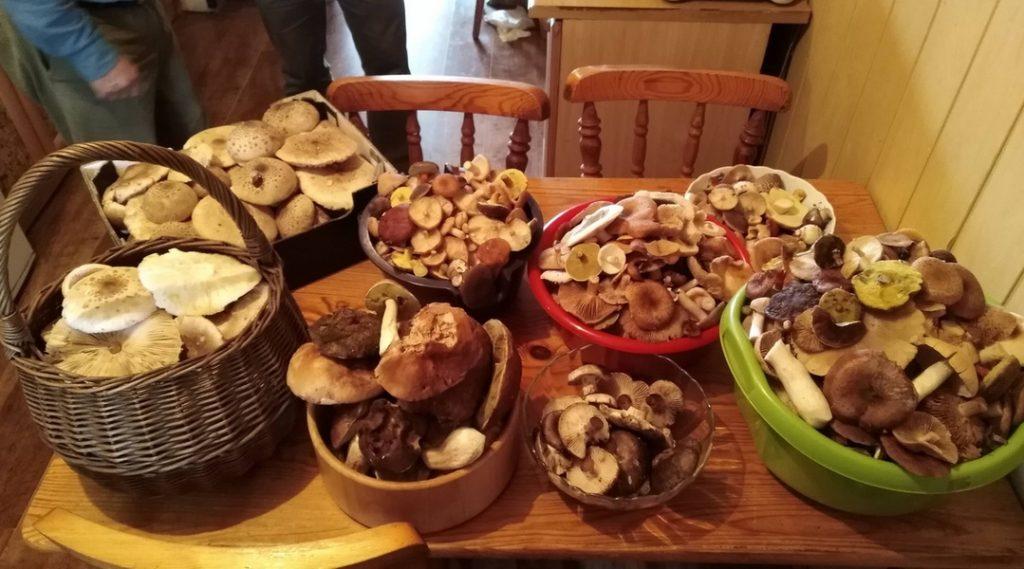 Tradycje związane zużytkowaniem dziko rosnących grzybów jadalnyc
