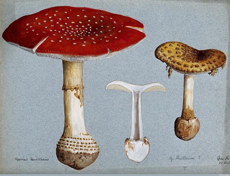 Ohistorii spożywania grzybów