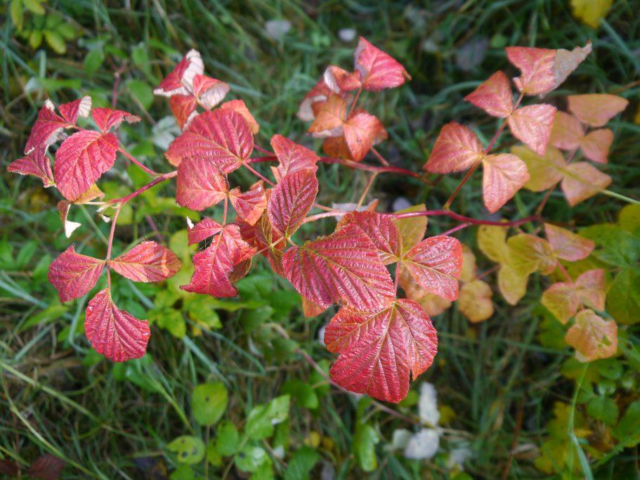 Dzikie gatunki pokrewne roślinom uprawnym występujące wPolsce – monografia naukowa