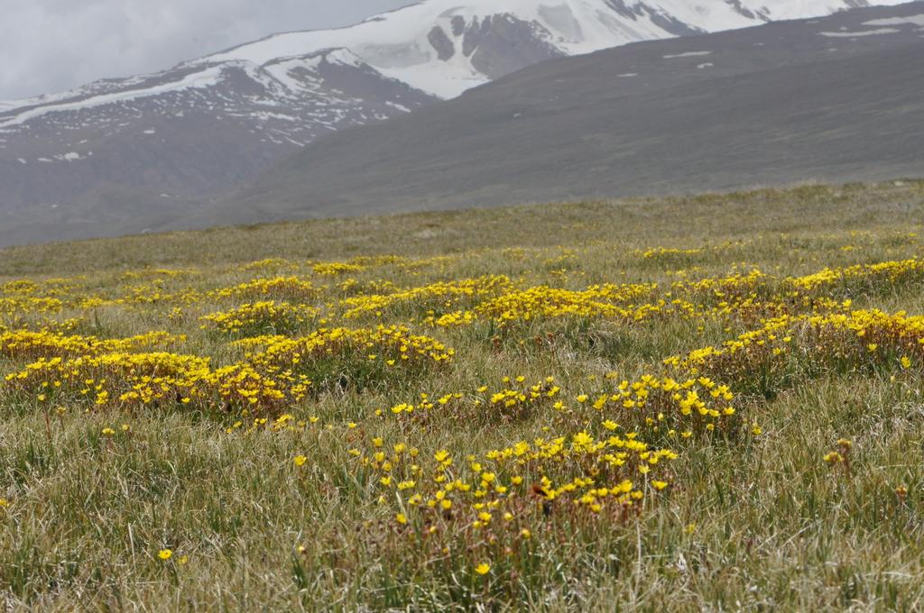 Młaki iźródliska regionu Irano-Turańskiego sklasyfikowane
