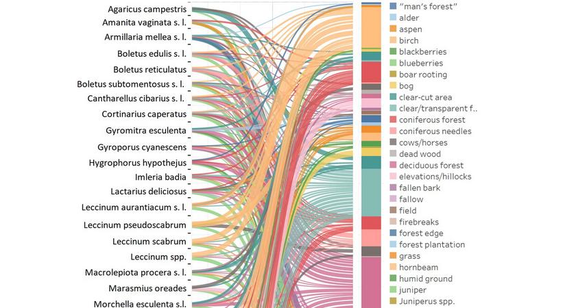 Etnoekologia grzybów: preferencje siedliskowe ipercepcja zmian liczebności grzybów obserwowane przezgrzybiarzy wPolsce