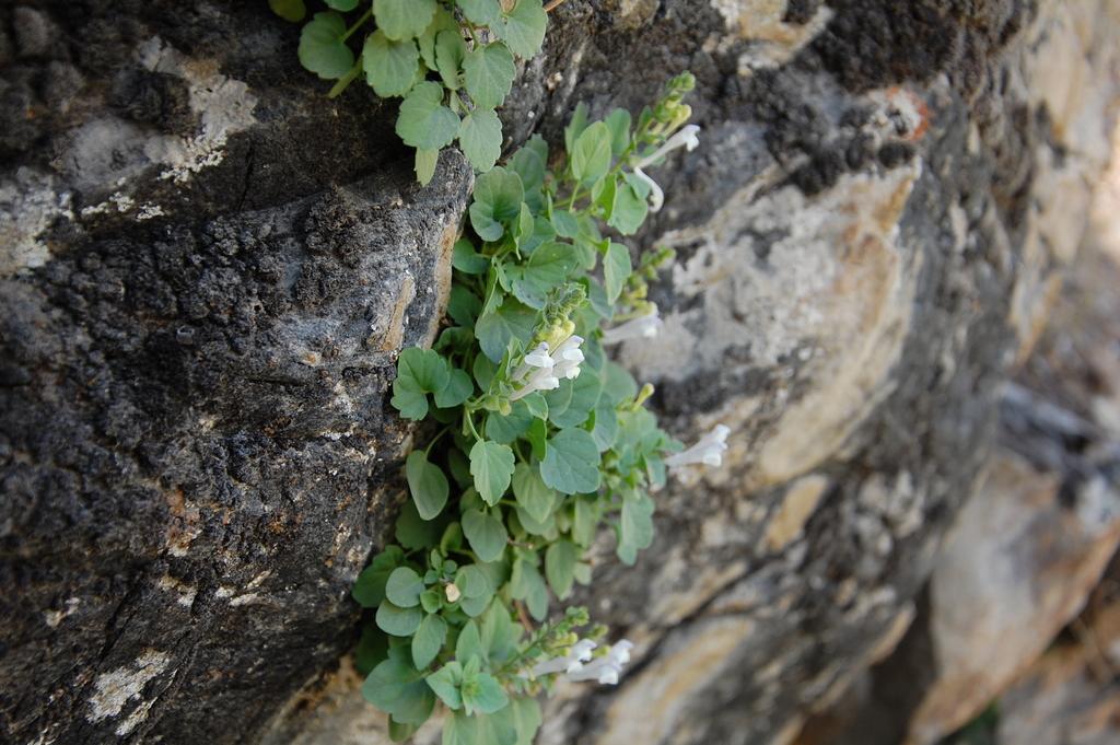 Wyniki badań klasyfikacyjnych zbiorowisk skalnych zaprezentowane wczasopiśmie Plant Biosystems