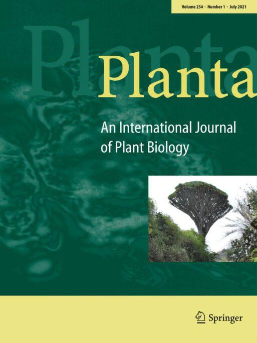 Dracaena draco naokładce czasopisma Planta