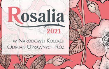 Baner Rosalia